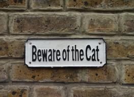 "Rectangular ""Beware of the Cat"" sign"
